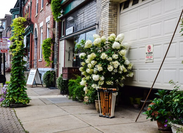 Susan's Antiques has attracted a lot of attention this summer because of the owner's green thumb.