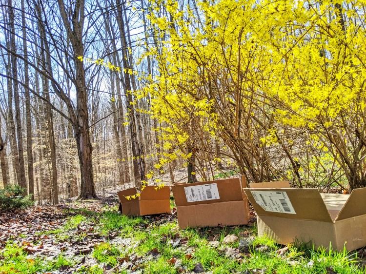 three boxes sitting outside near forsythia bushes