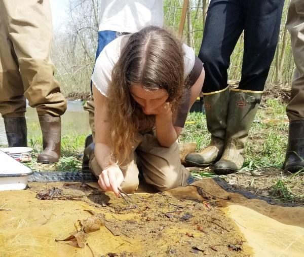 A student monitors a stream.