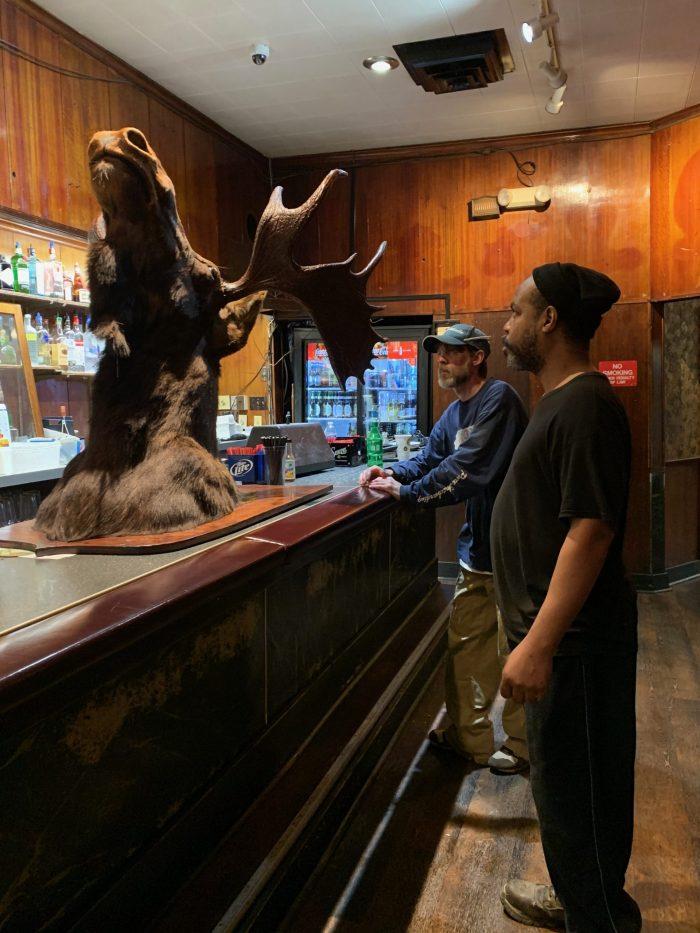 Moose head on bar