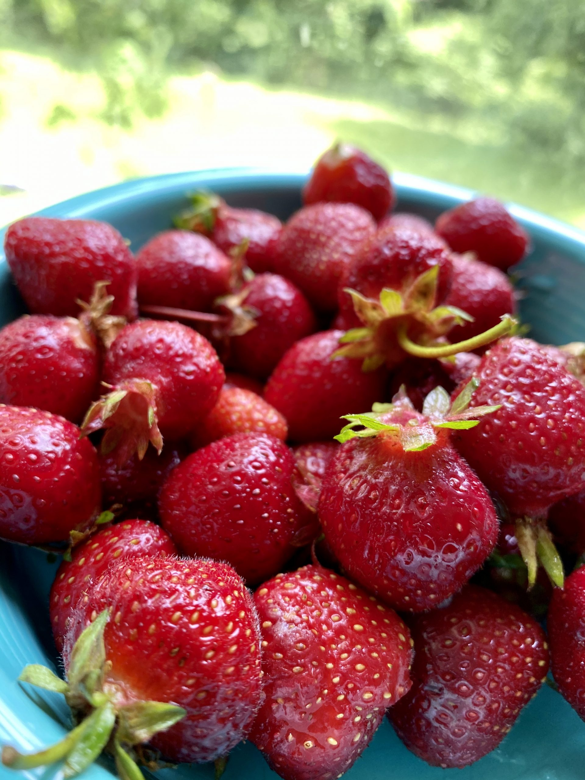 WV strawberries