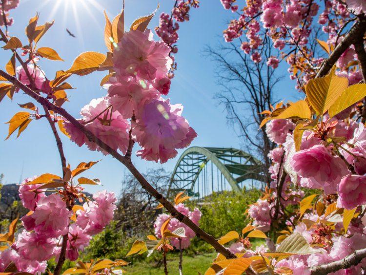 ft Henry bridge flowers