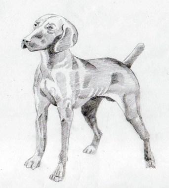 2015 - (ZRC) - 27 - Hond