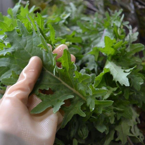 We Grow Kale