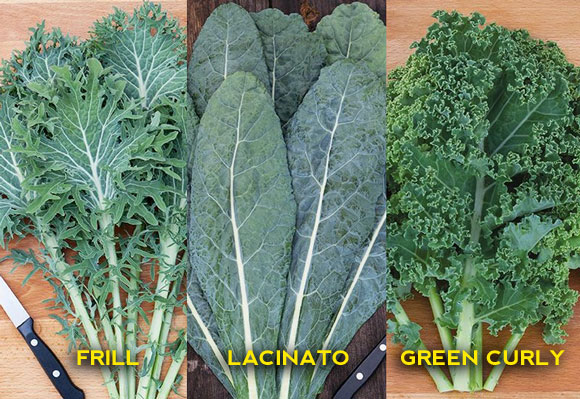 We Grow Variety of Kale