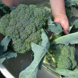 We Grow Broccoli
