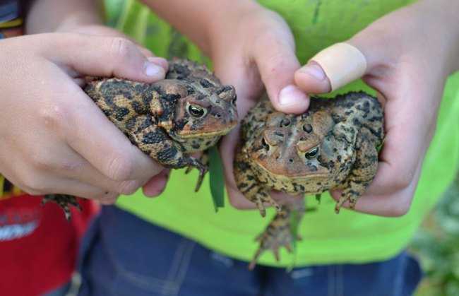 Toads at We Grow LLC