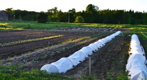 We Grow Garden Early June 2015