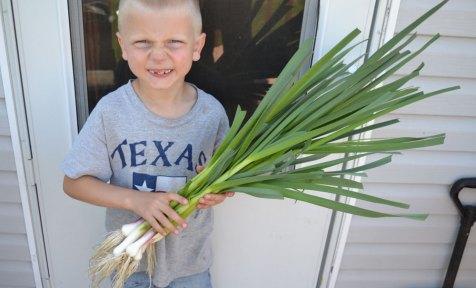 Spring Green Garlic