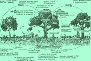Permaculture Designer's Manual