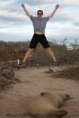 Sea lion jumping