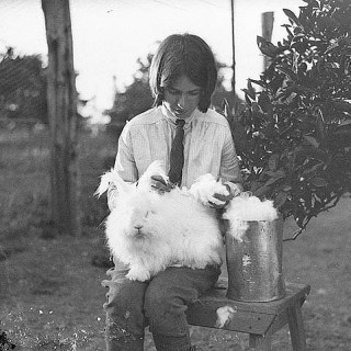 Giving a rabbit a haircut, 1930s