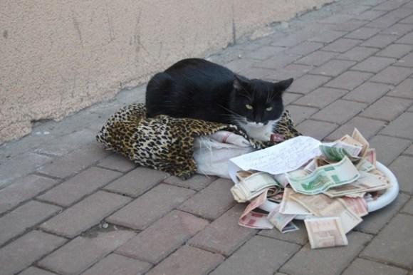 Meow meow pledge meow