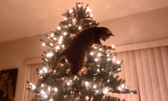 Cat-Christmas-Tree-Disaster