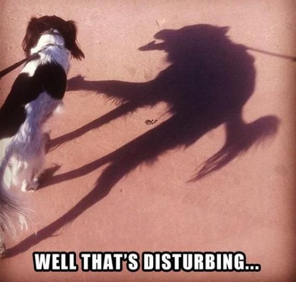 The shadow knows