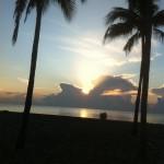 palmier sur l'océan