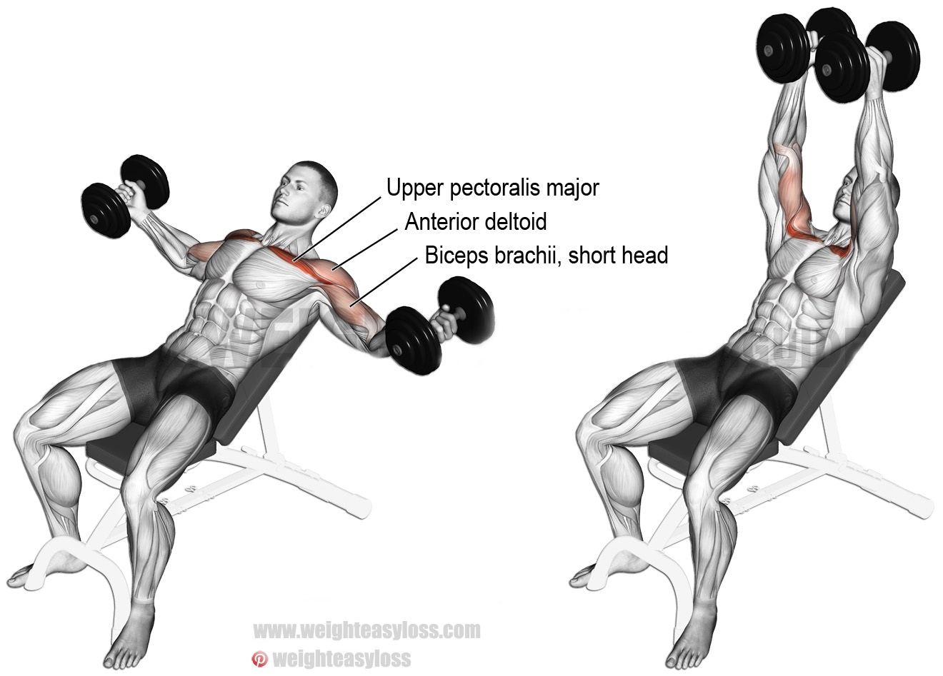 How To Incline Dumbbell Flyes