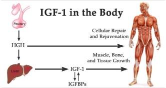 Buy IGF-1 Online