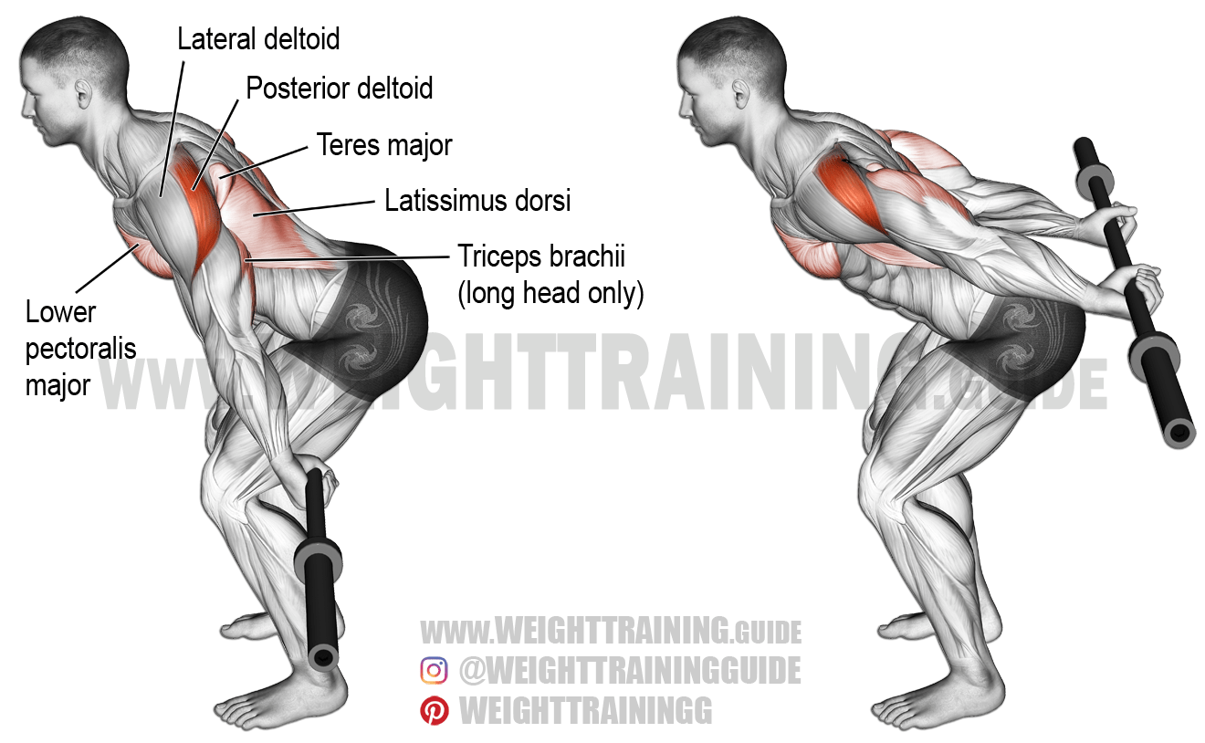 Bent Over Barbell Reverse Raise Exercise Instructions And