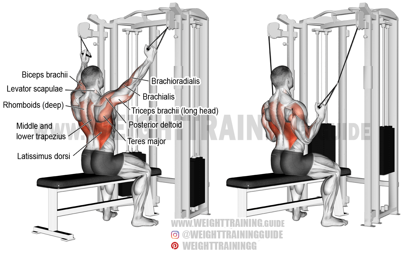 Double Cable Neutral Grip Lat Pull Down Exercise