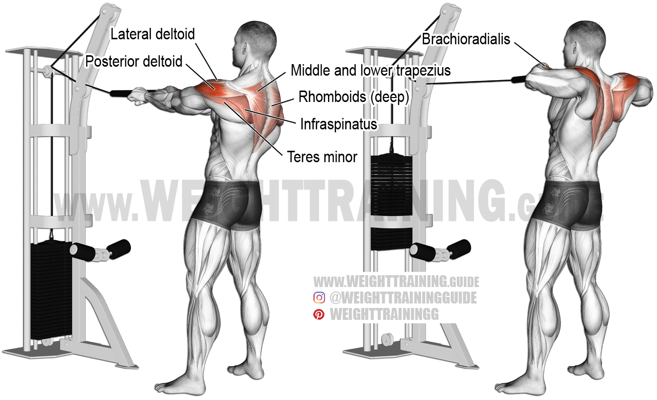 Diagram Of Tricep