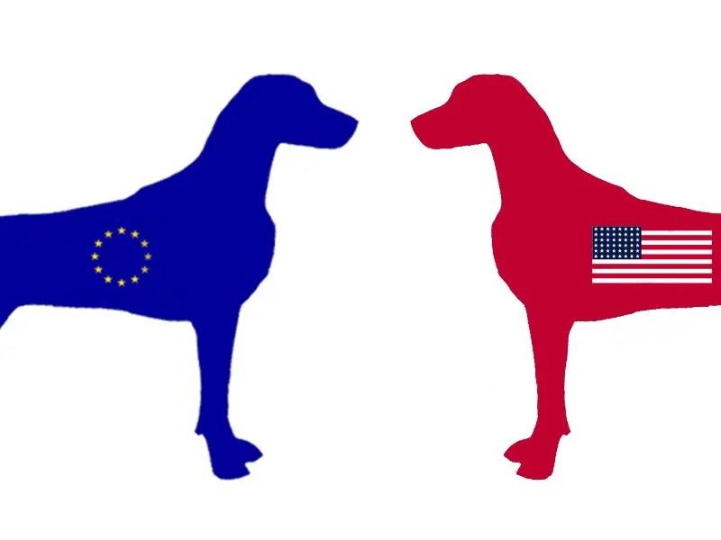Weimaraner in Europe and America