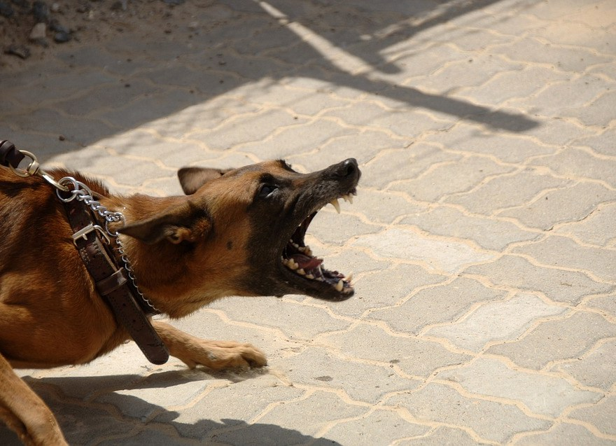 Aggression in dogs and how to prevent it