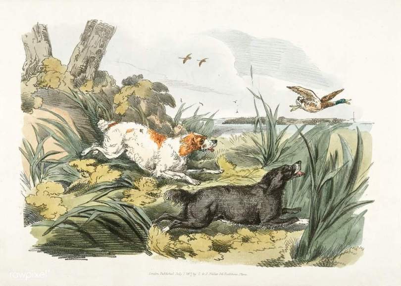 How to train bird dog for hunting