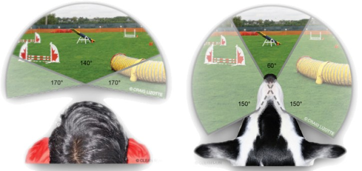 How do dogs see the world