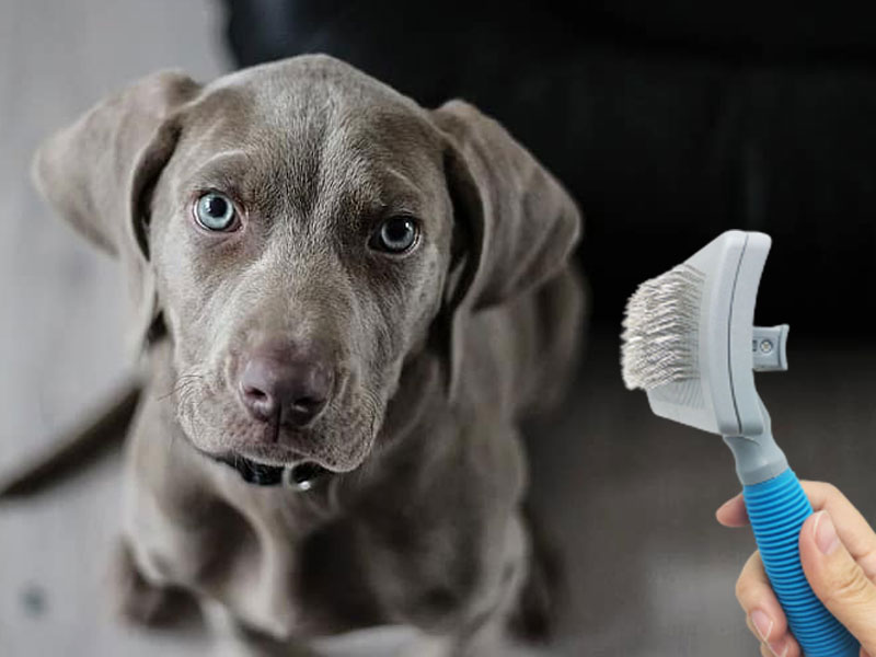 why do dogs shed