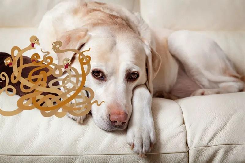 Heartworm prevention for dogs without vet prescription