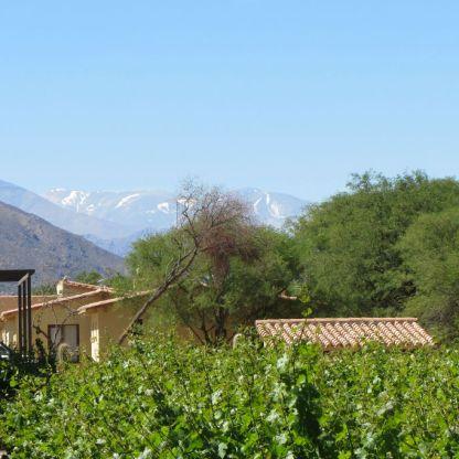 Weingut Colomé in den Anden