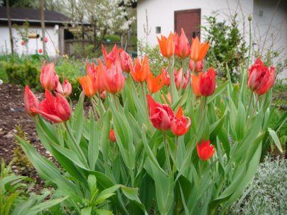 2013-05-01_Garten09