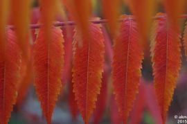 2015-10_25_Herbstpower02