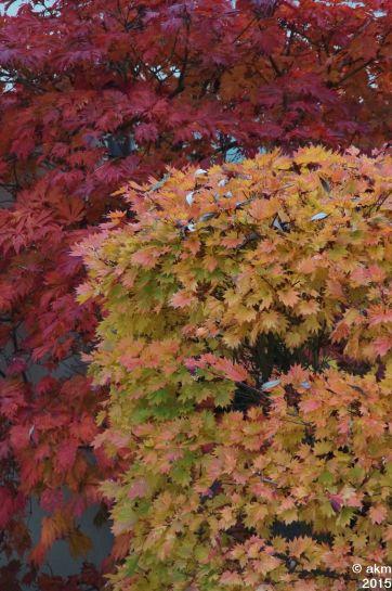 2015-10_25_Herbstpower04