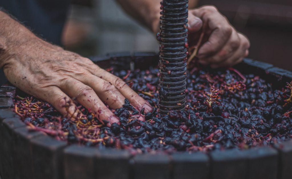 Traditioneller Weinbau in Apulien