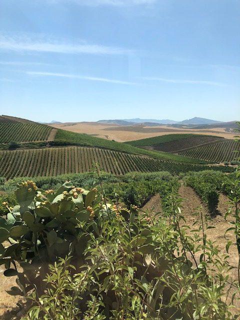 Weinberge Spadafora mit Grillo Wein