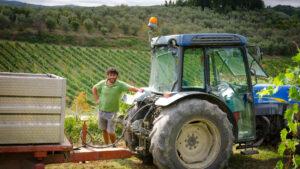 Carus Vini - Bei der Ernte