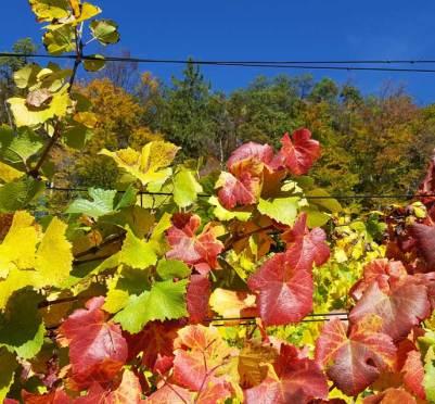 Herbstmesse ≈ Weinmesse