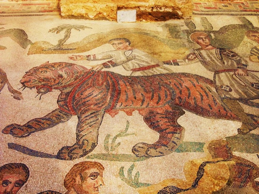A-captive-tigress-in-the-big-game-hunt-mosaic