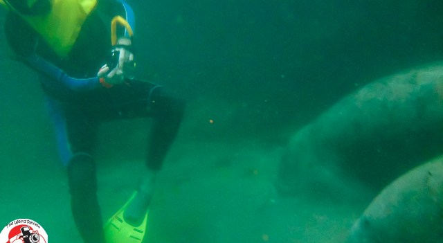 Snorkling, swimming, and snapping pics with the Manatee