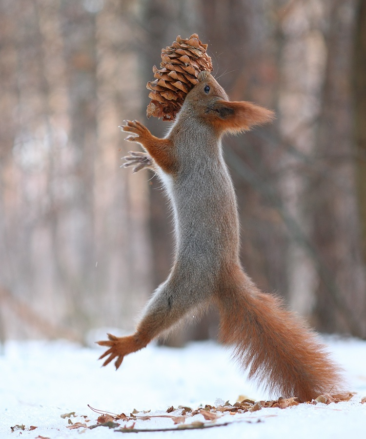 Playful_Squirrels8