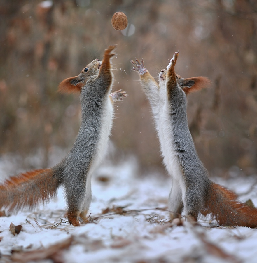 Playful_Squirrels9
