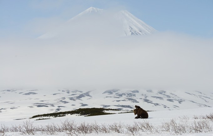 bears_kamchatka6