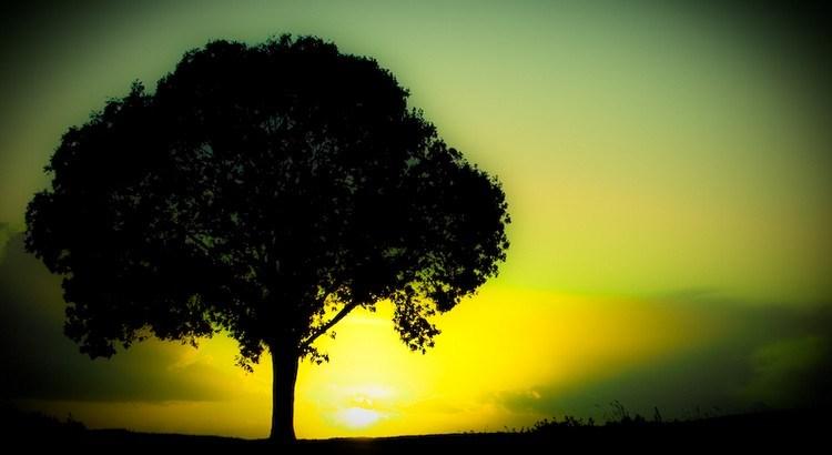 Die Neigungen des Herzens sind geteilt wie die Äste einer Zeder. Verliert der Baum einen starken Ast, so wird er leiden, aber er stirbt nicht. Er wird all seine Lebenskraft in den nächsten Ast fließen lassen, auf dass dieser wachse und die Lücke ausfülle. - Zitat von Khalil Gibran