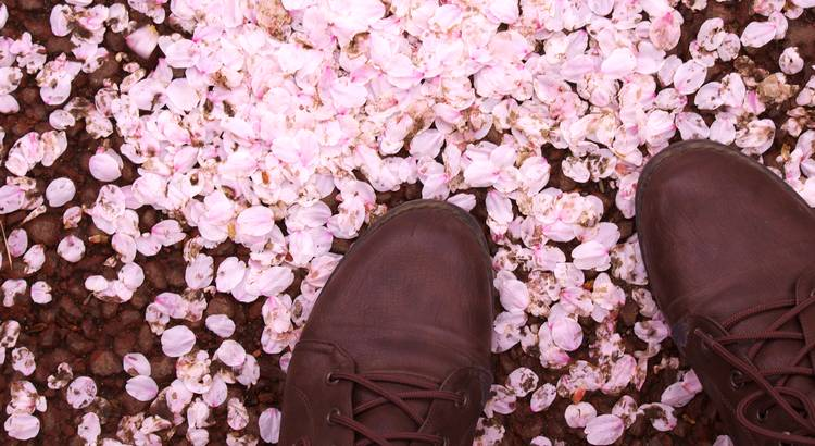 Zu erkennen, dass man glücklich war, ist leicht. Zu erkennen, dass man glücklich ist, ist Kunst. - Zitat von Selim Özdoğan