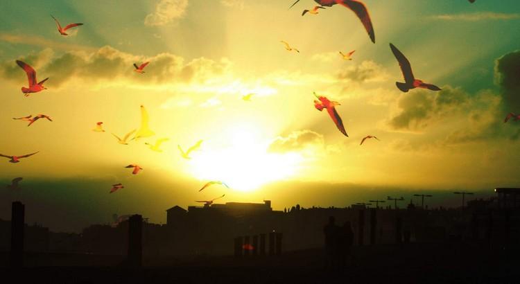 Gib denen, die du liebst, Flügel, um wegzufliegen. Wurzeln, um zurückzukommen und Gründe, um zu bleiben. - Zitat von Dalai Lama