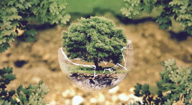 Erst wenn der letzte Baum gerodet, der letzte Fluss vergiftet, der letzte Fisch gefangen ist, werdet ihr merken, dass man Geld nicht essen kann. - Cree Indianer