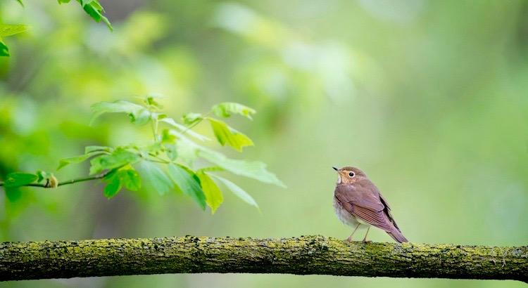 Ein Vogel hat niemals Angst davor, dass der Ast unter ihm brechen könnte.Nicht weil er dem Ast vertraut, sondern seinen eigenen Flügeln. - Unbekannt