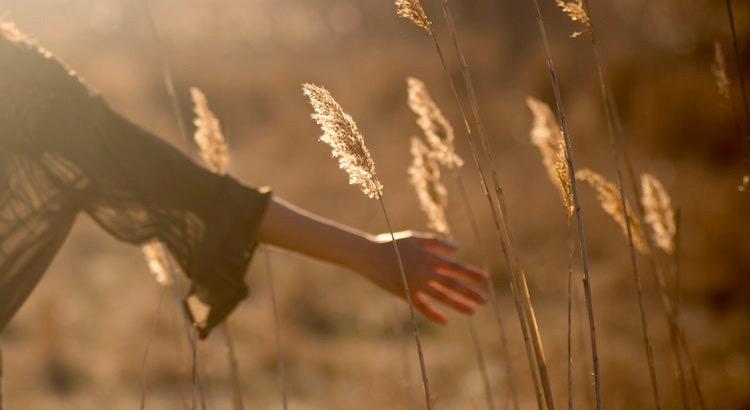 Manchmal streift einen ein Flügel der Erinnerung. Ein Luftzug der vergangenen Tage. Ein Hauch glücklicher Momente. Wenn dies passiert, solltest du stehen bleiben und lächeln. - Unbekannt